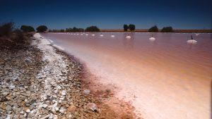 Pink Lake - 3